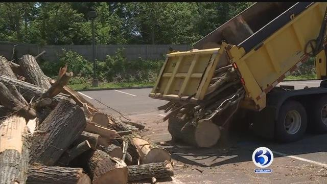Crews continue to clean up storm damage (WFSB)