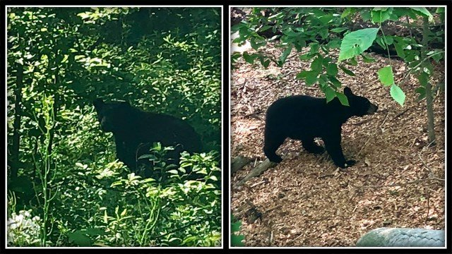 North Haven Police issue warning after recent bear sightings (North Haven PD)