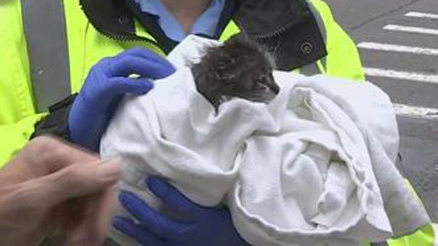 A cat was rescued from a house fire on Sisson Avenue in Hartford. (WFSB)