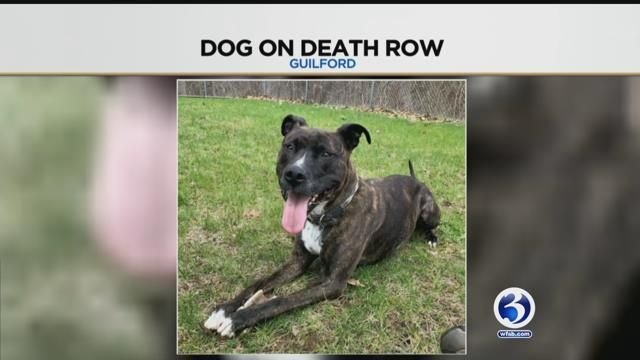 A family is fighting to free their dog that is on death row (Submitted)