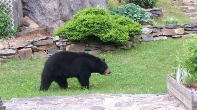Police release 911 call after bear breaks into house