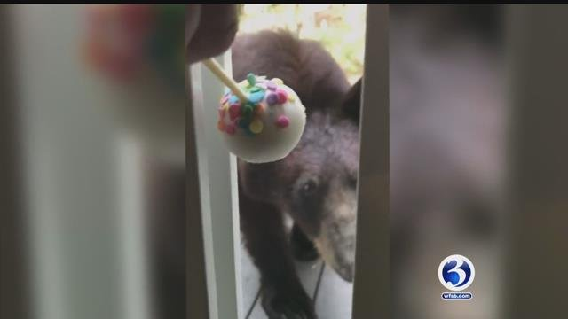 Video: Black bear sightings on the rise in Suffield