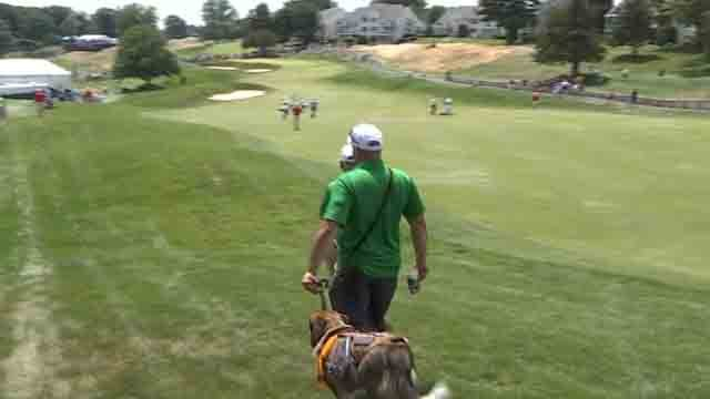 Service dogs were allowed at the TPC River Highlands this year (WFSB)