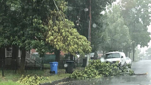 Trees and wires are down on roads as strong storms move through the state (submitted)