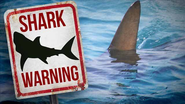 Rare shark attacks reported off NY island