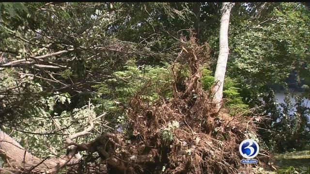 Video: NWS surveys damage after tornado in Ashford