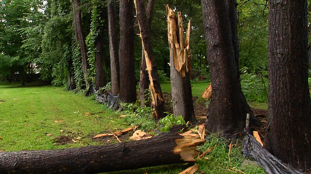 VIDEO: Lightning strikes home and trees in Watertown on Saturday