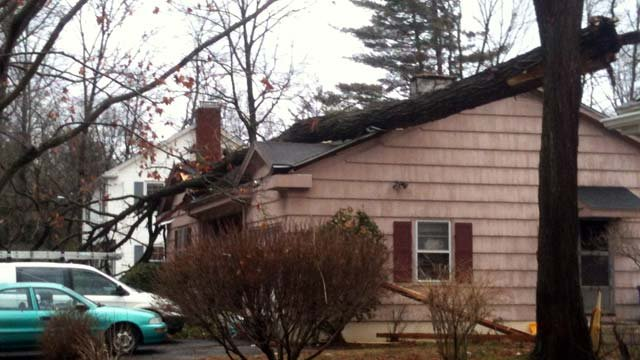 A tree on a home on Hilliard Street in Manchester