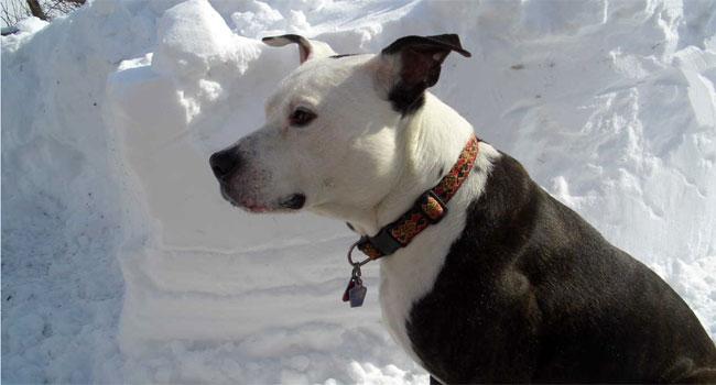 © Oscar enjoying the sun and snow in North Canaan.