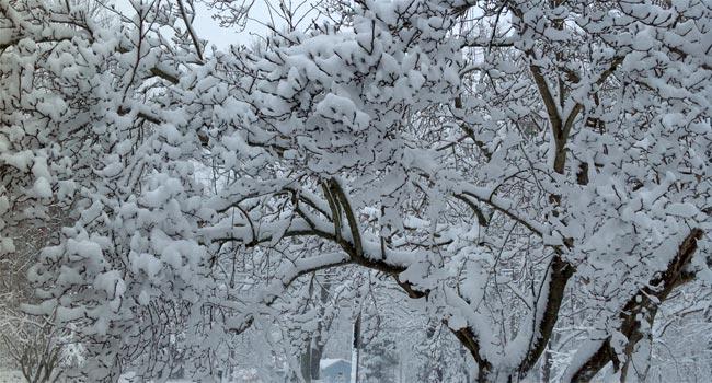 WFSB viewer photo from Killingworth.