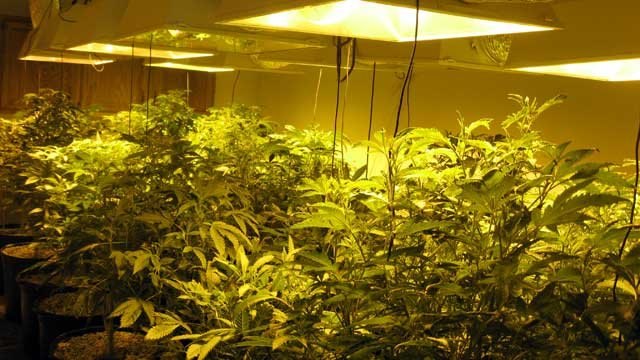 Connecticut State Police said they busted a marijuana grow operation at a home in Thompson Tuesday night.
