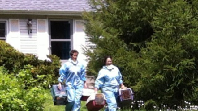 Animal control officers wore hazardous materials suits when they entered Kathleen Matczak's Scotland Road home to remove 42 mostly feral cats from inside the residence on May 17.