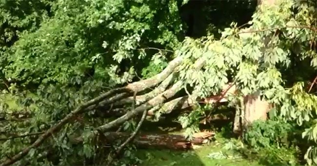 The tornado damaged several trees in Tolland.