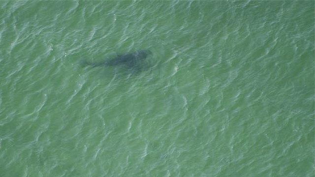 Photo by Cape Cod Shark Hunters