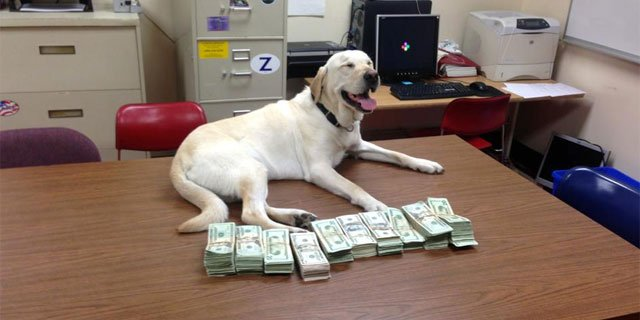 Norwich police K9 with the money seized by the department. (Photo courtesy Norwich Police Department)