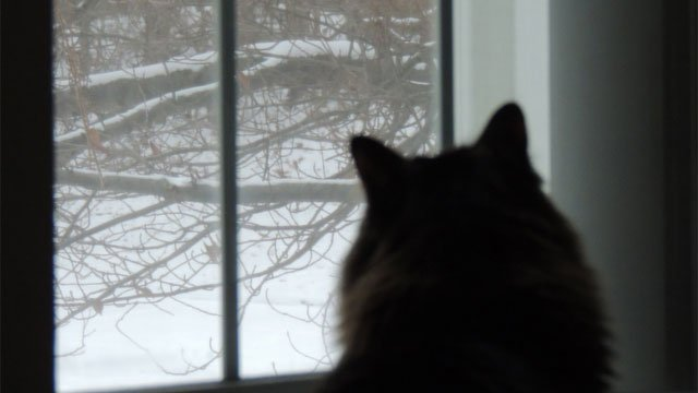 Oliver the cat enjoying watching the flakes fly in Redding.