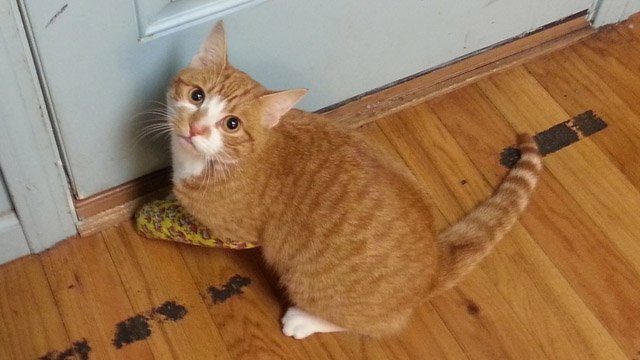 Cheddar was shot in the leg twice by a pellet gun, according to his owner.