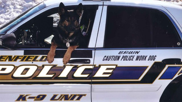 The following photo of Bruin was provided by the Enfield Police Department.
