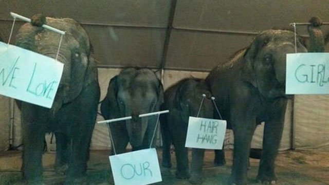 Photo Credit: @RinglingBros