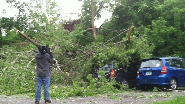 Trees brought down wires all along Van Car Road, where a man was electrocuted Tuesday night. (WFSB photo)
