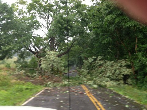 Trees down in Vernon. (iWitness photo)