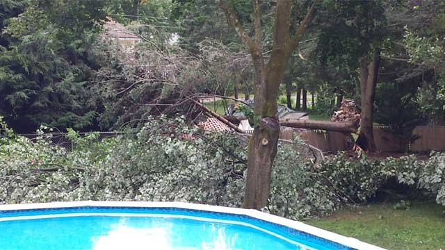 A tree was damaged in the yard of a home on Graham Road in South Windsor (iWitness Photo)