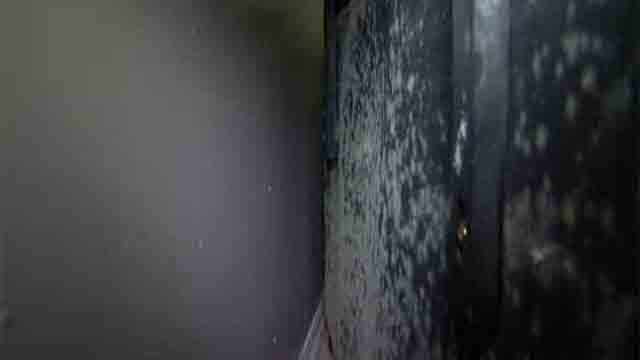 Mold hits a Hartford apartment after a pipe burst. (WFSB)