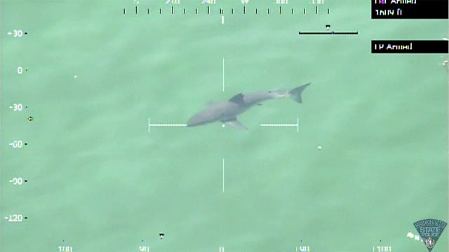 The following photo of the shark is from the Massachusetts State Police Facebook page.