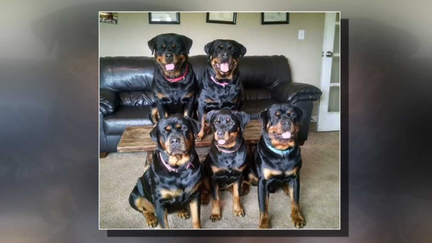 Five of the six dogs seized by police. (Family photo)