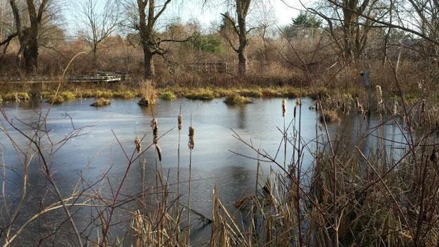 Pond along Wetlands Garden trail at Wickham Park. (WFSB)