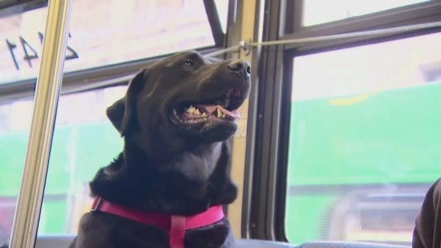 Eclipse on one of her bus rides. (CNN, KOMO photo)