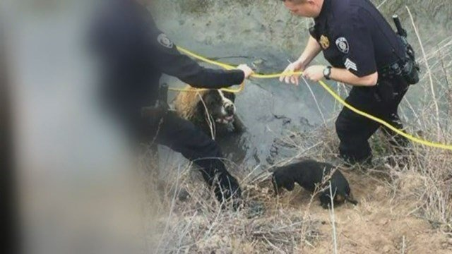 Razor assists with the rescue of Jazzy. (CBS photo)