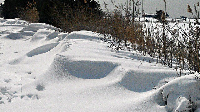 Snow drifts on the Willard Island Loop Trail. (WFSB)