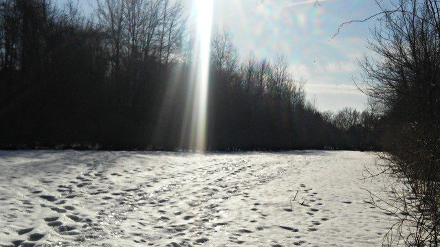 Snowy trail at sanctuary in South Windsor. (WFSB)