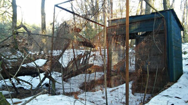 Dilapidated cages line the Blue Trail at Shade Swamp Sanctuary (WFSB)