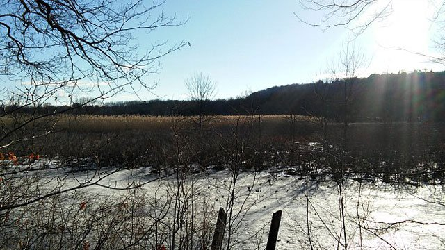 Here's the view of the Blue Trail in Shade Swamp Sanctuary. (WFSB)