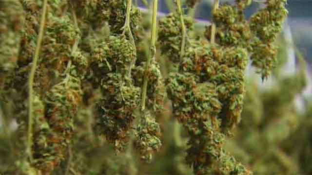 Proposed Connecticut bill would call for legalize of marijuana. (WFSB)