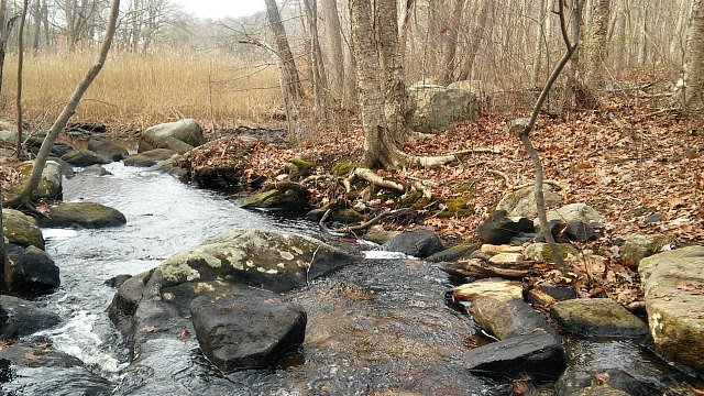Stream running through Raven's Woods in East Lyme. (WFSB)