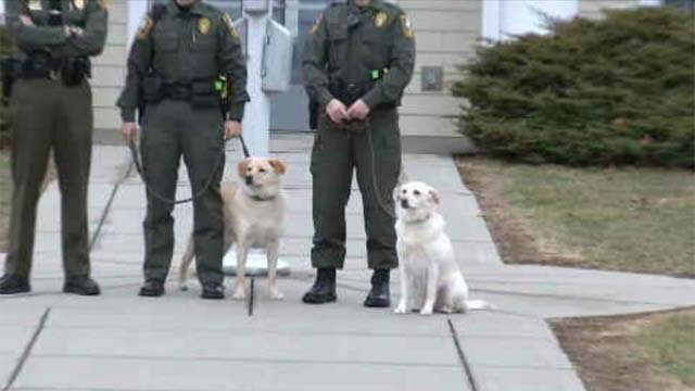 Dogs trained to sniff out illegally caught fish (WFSB)