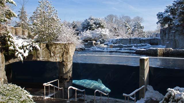 Mystic Aquarium Offering An Early Week Savings Wbrc Fox6