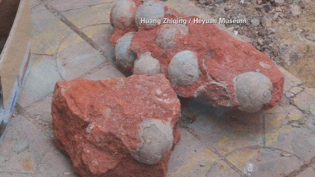 Heyuan City in China unearthed more dinosaur eggs. (CNN/Heyuan Museum photo)