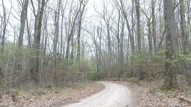 The cell tower is proposed to be built on this road in East Lyme. (WFSB)