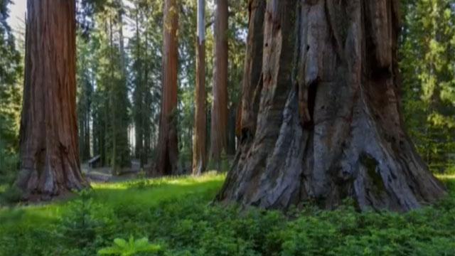Yosemite in California