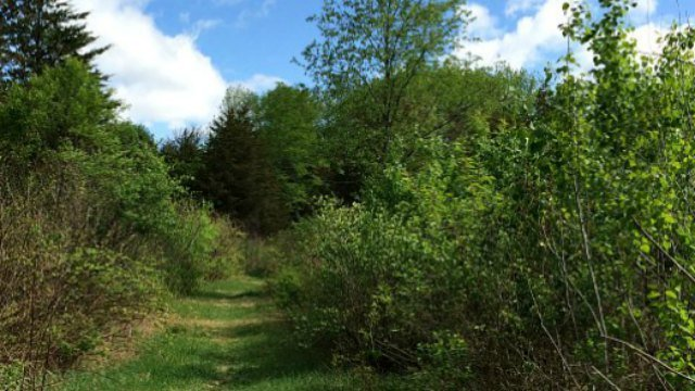 Here's the Yellow Trail at Pigeon Swamp Preserve (WFSB)