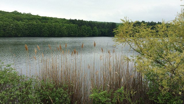 View of Lake Wintergreen from the trail