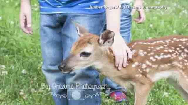 Baby deer photobombs family portraits (CNN)