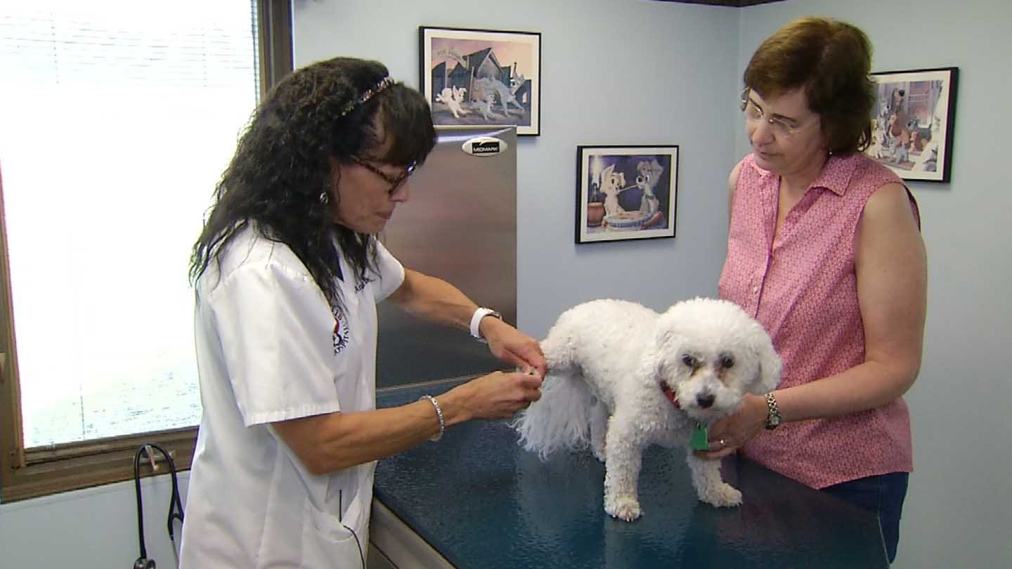 Bella's family said she suffers from pet allergies. (WFSB photo)
