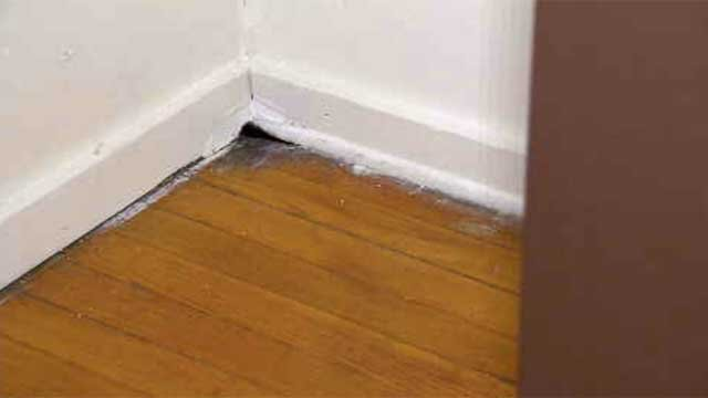 Hartford mother says her apartment building is infested with mice (WFSB)