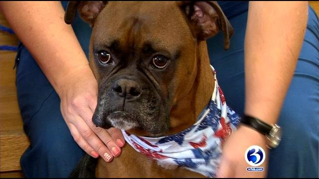 Fireworks can scare pets and cause them to run away from homes. (WFSB)