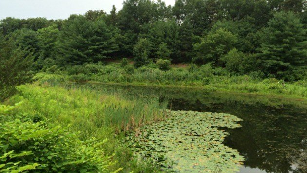 Pond at Tomasso Nature Park